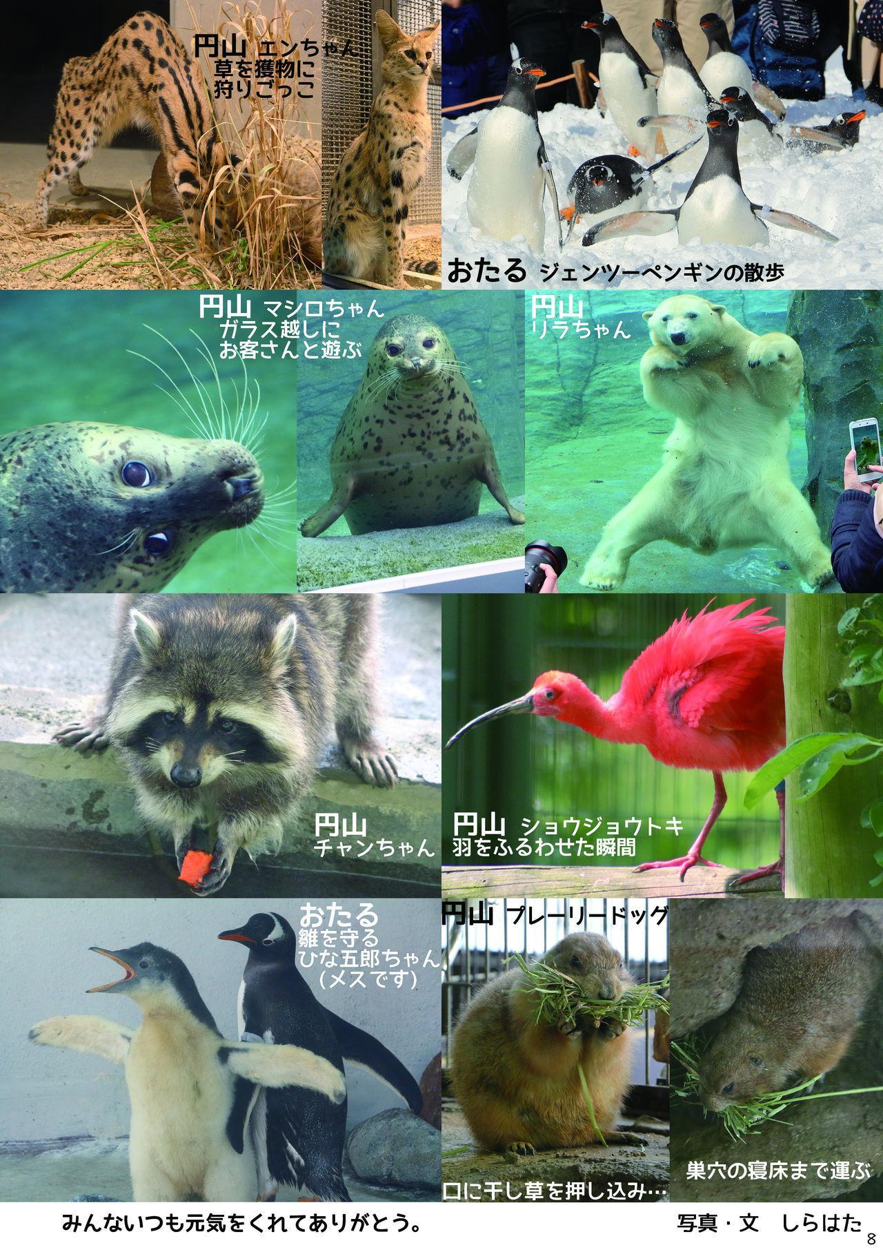 may Kemono Friends Thre Goudoushi 2 9