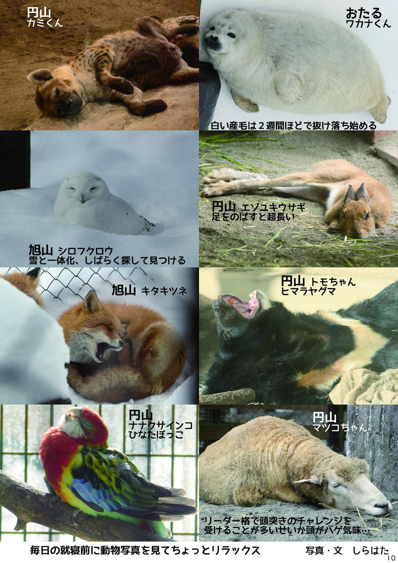 may Kemono Friends Thre Goudoushi 2 11