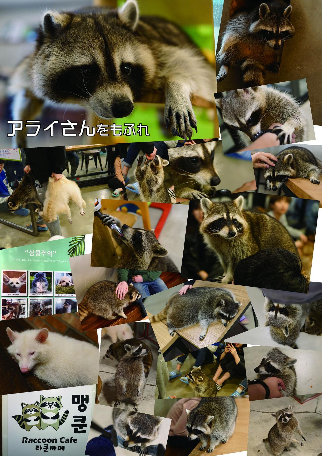 may Kemono Friends Thre Goudoushi 2 152