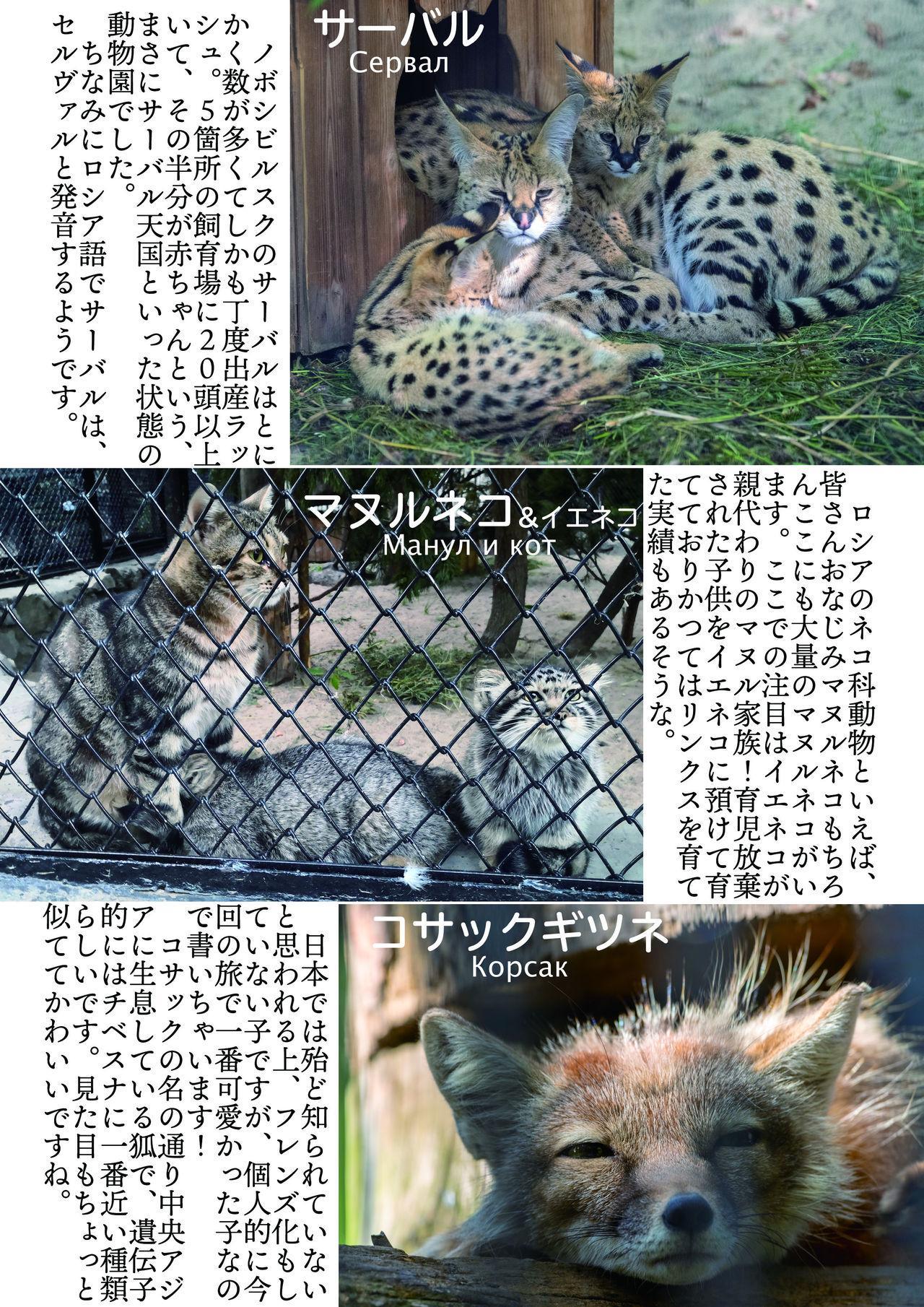 may Kemono Friends Thre Goudoushi 2 161