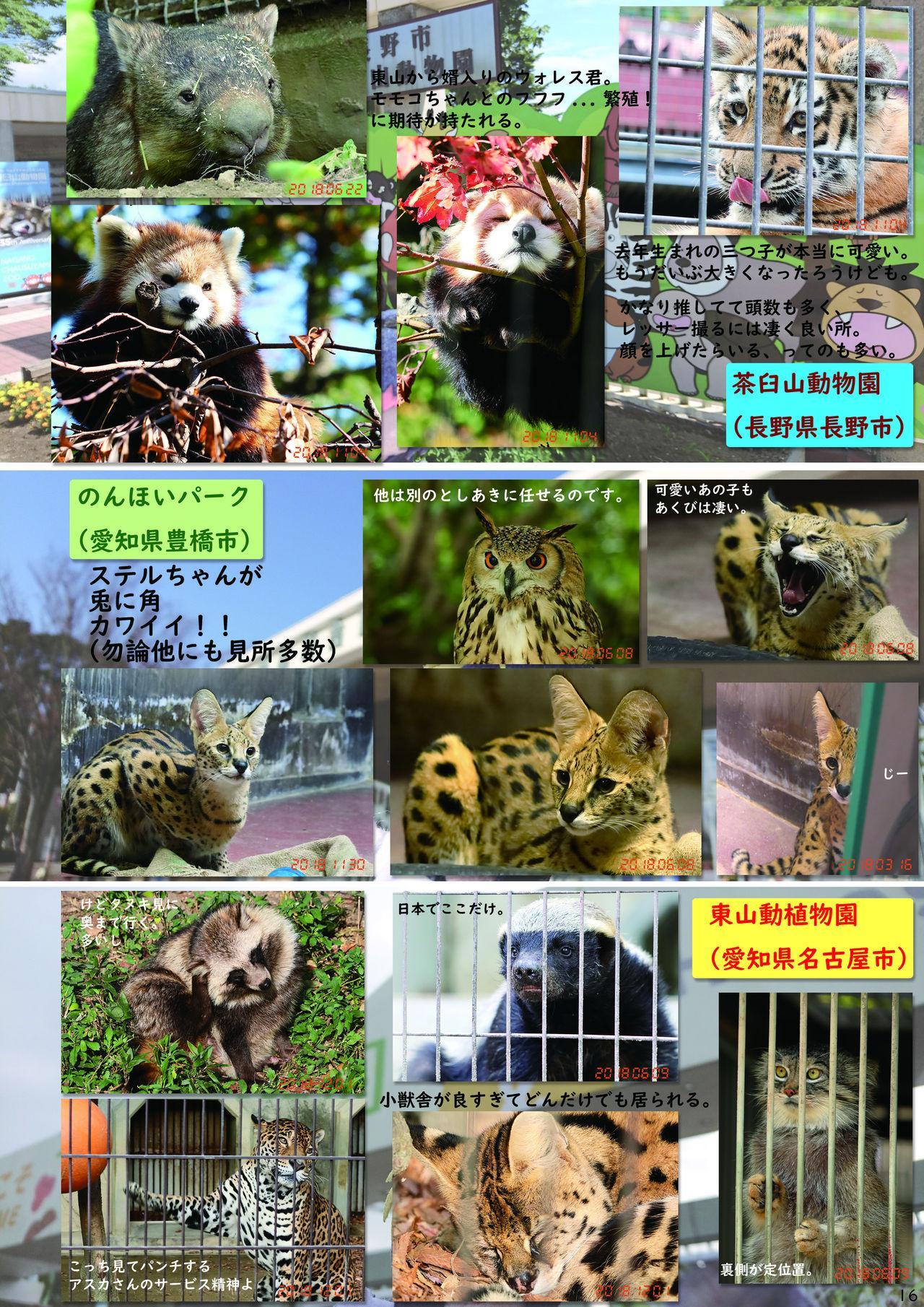 may Kemono Friends Thre Goudoushi 2 17